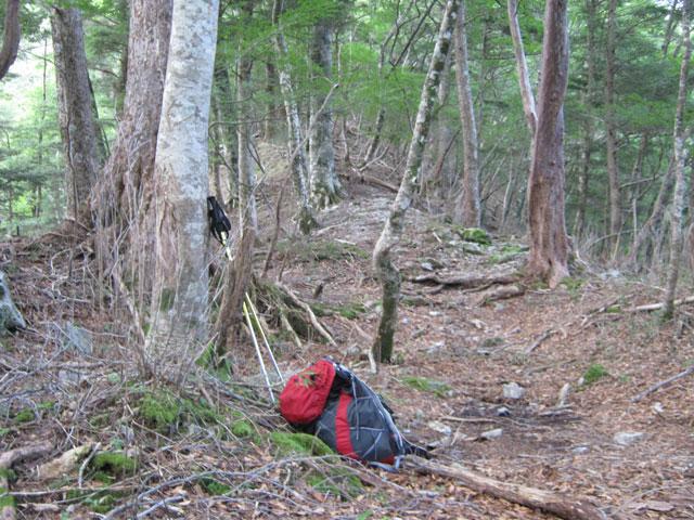 登山道が明瞭な森の中の写真