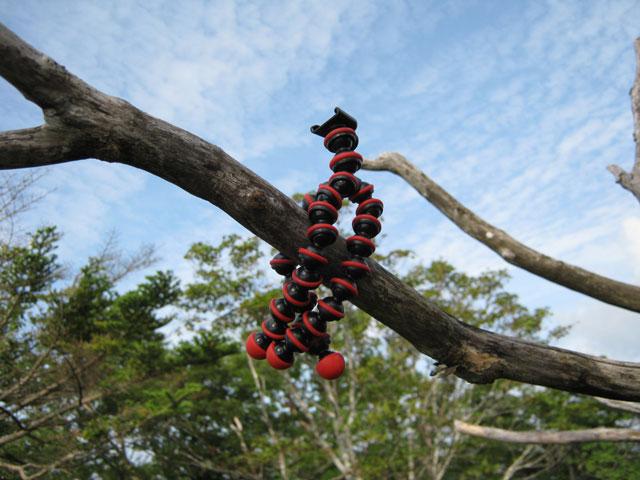 ゴリラポッド三脚を木にくくりつけて固定している写真